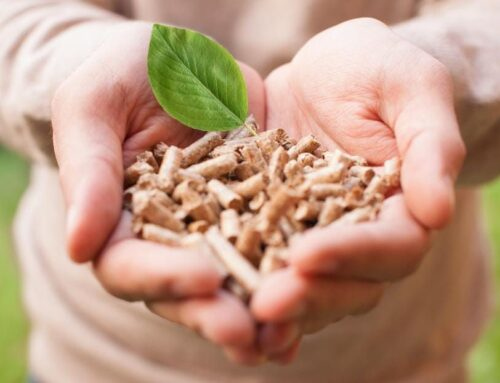 Why Biomass May Not Be The Clean Energy Panacea We Expected